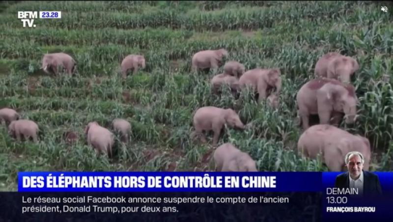 BFM TV, експедиция, слонове, Китай