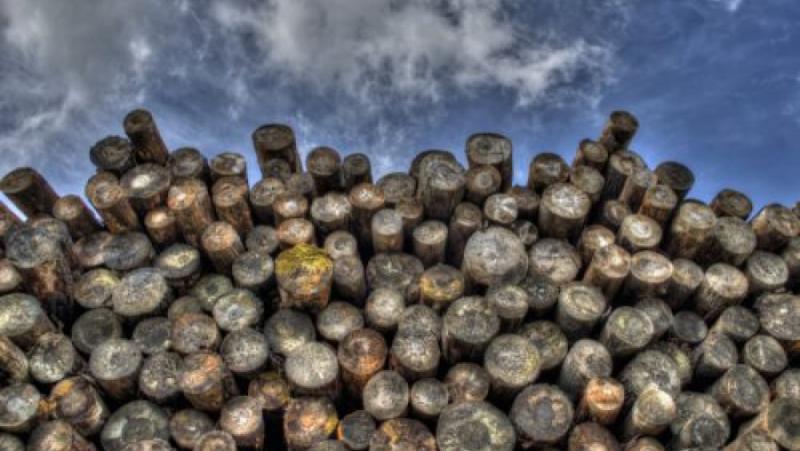 Замяна, петрол, биогориво, смъртна заплаха